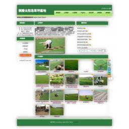 铜陵太阳岛草坪种植基地
